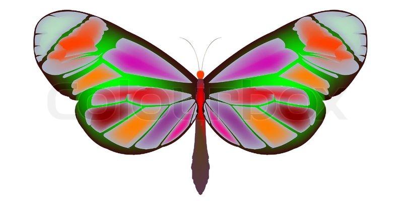800x400 Butterfly Cartoon, Art Illustration Stock Photo Colourbox