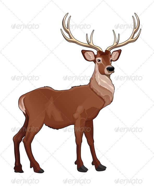 590x714 Elegant Deer By Ddraw Graphicriver
