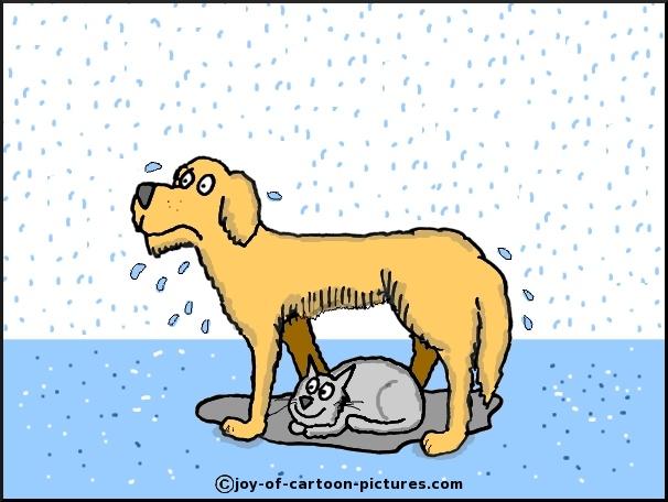 606x456 Its Raining Cats And Dogs,raining Cats And Dogs,rain Cartoon