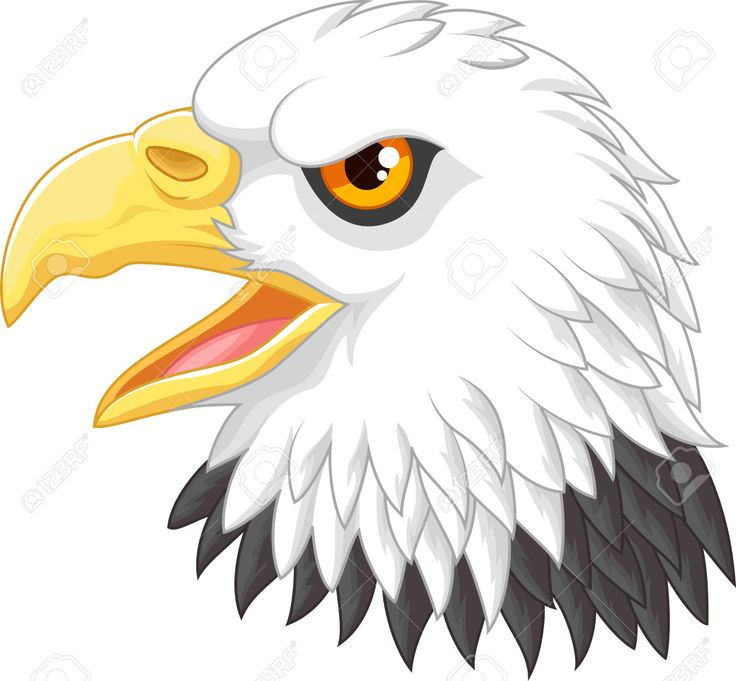 736x681 9 Best Eagle Images Cartoons, Eagles And Fox