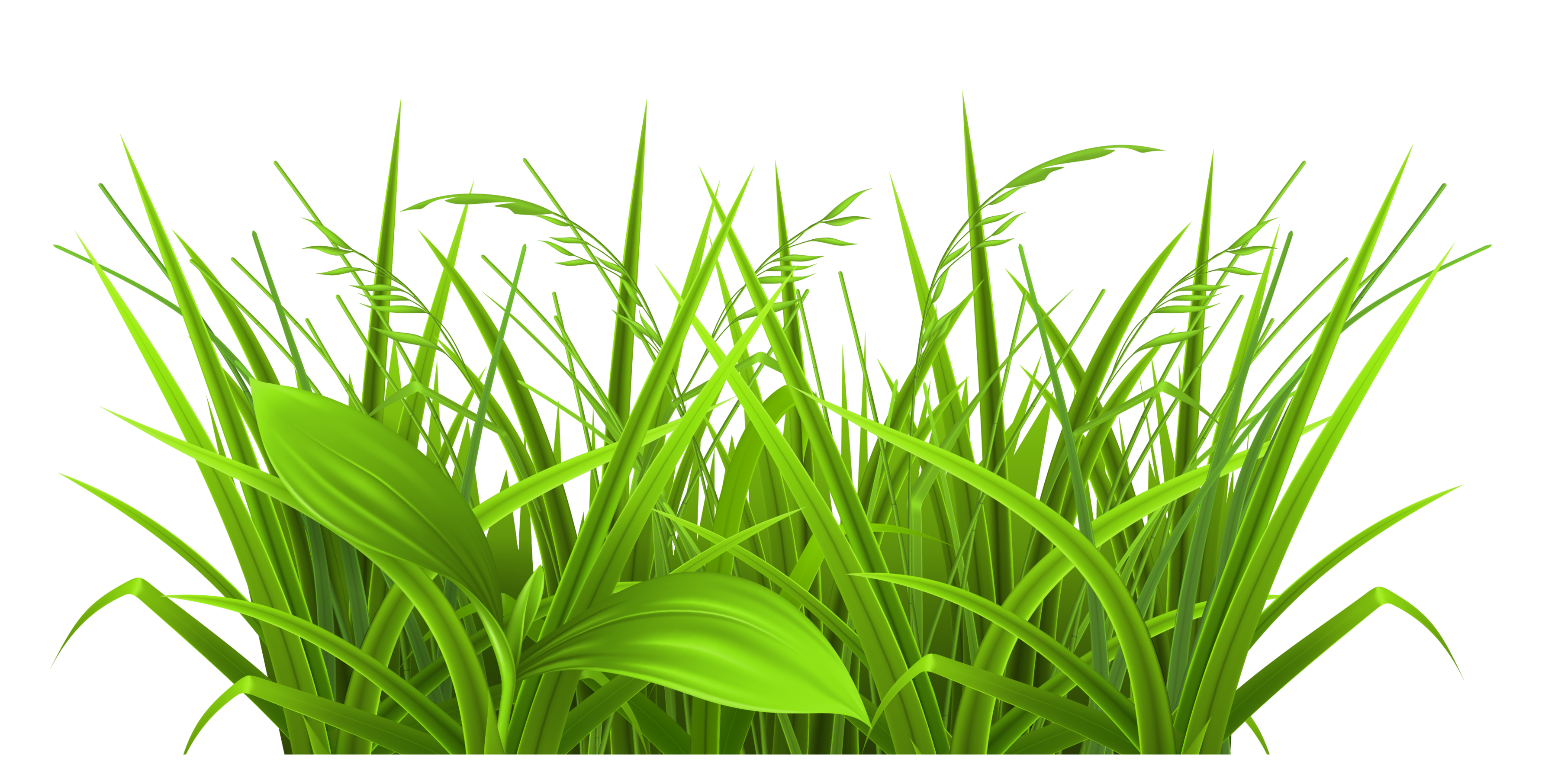 Grass realistic. Cartoon pictures of free