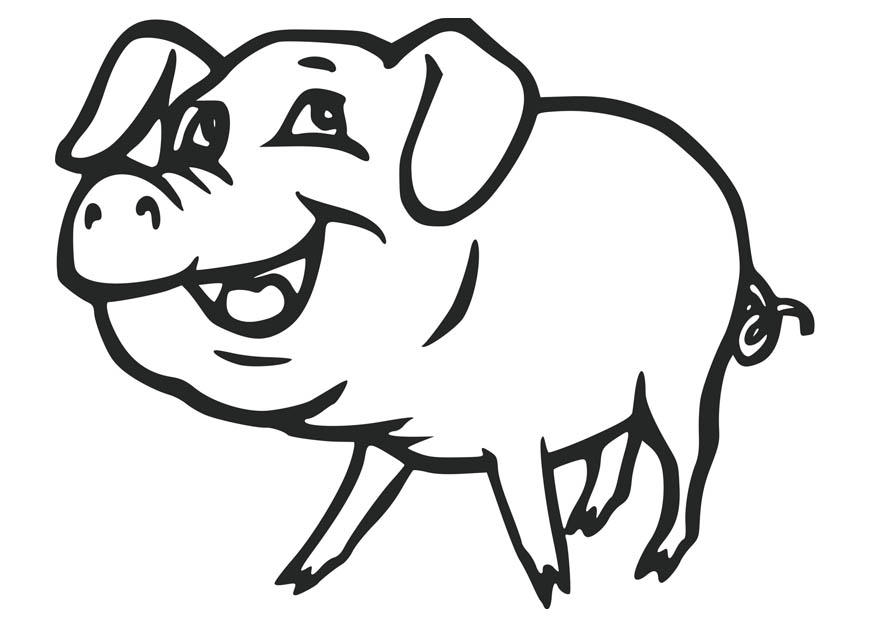 875x620 Cute Pigs Coloring Pages
