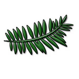300x300 Pine Tree Clipart Leaf