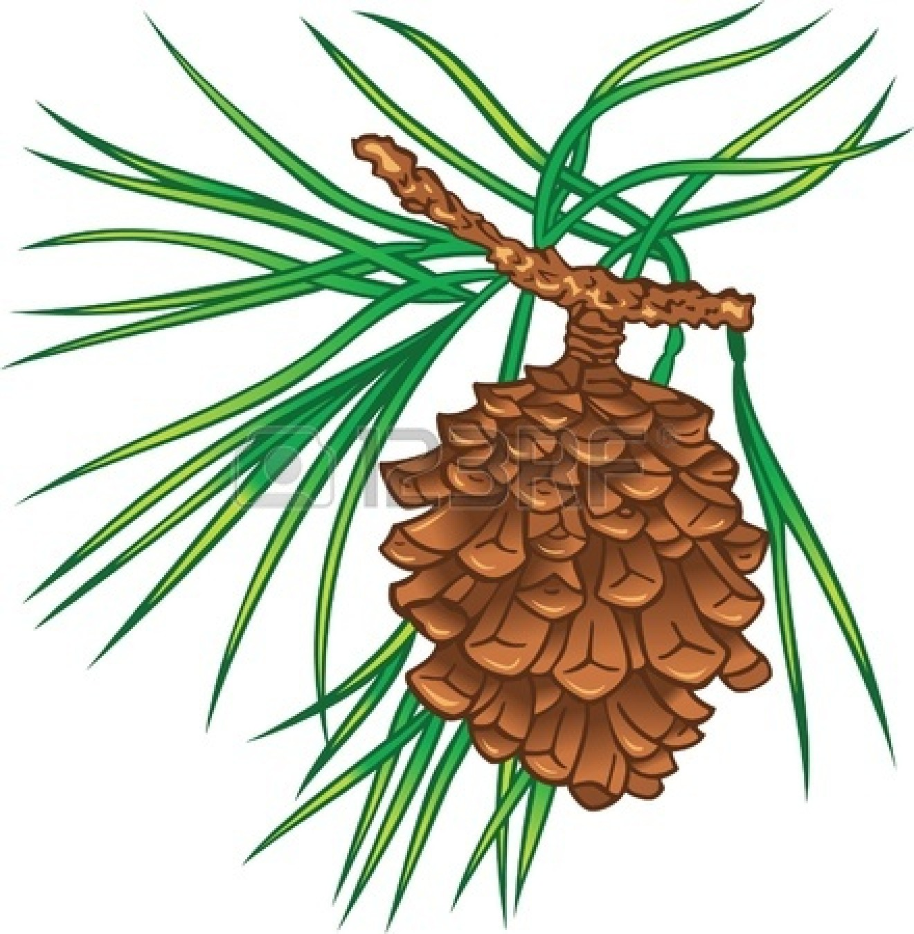 1320x1350 Pine Clipart Pine Tree Branch