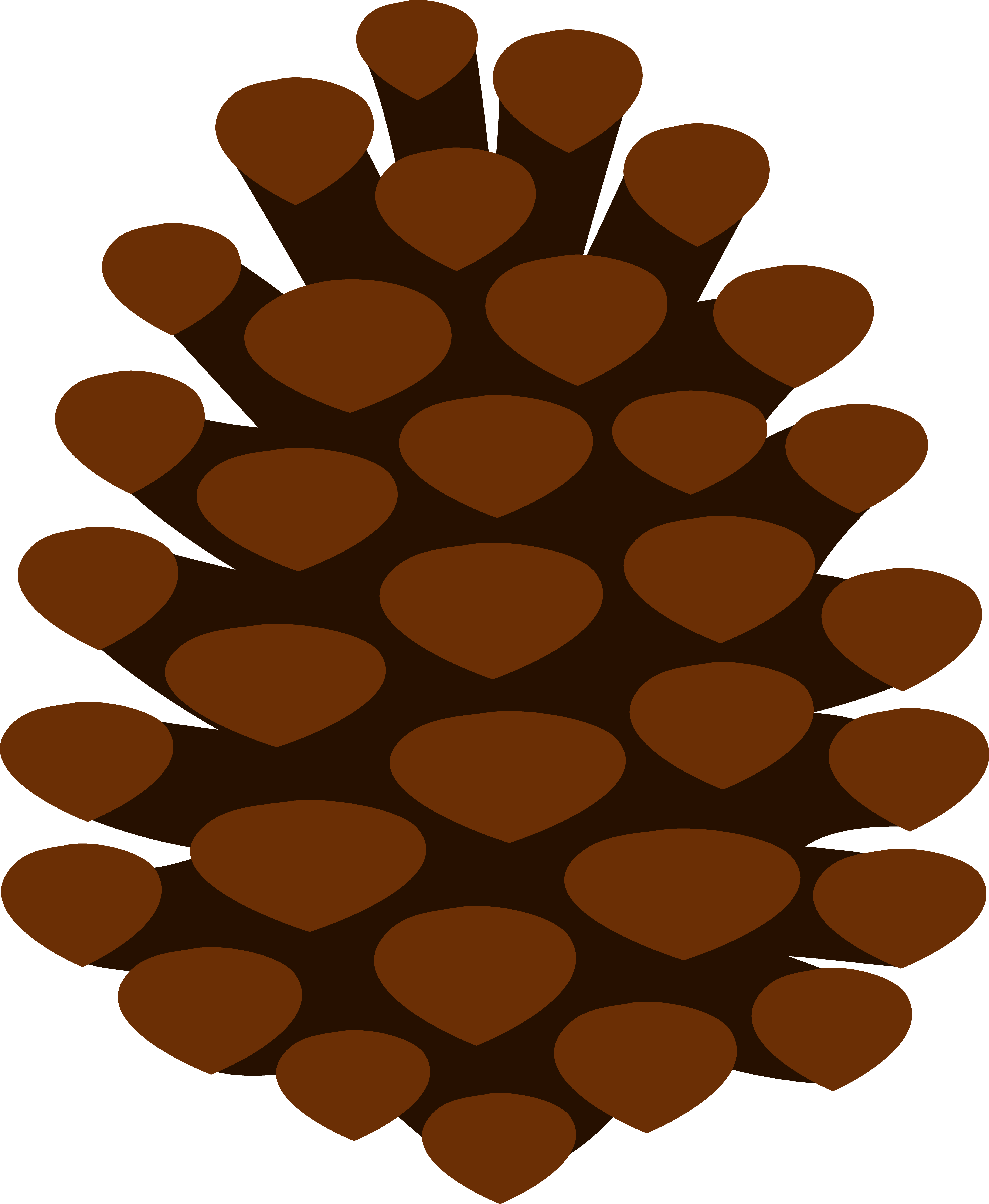 4654x5663 Simple Pine Cone