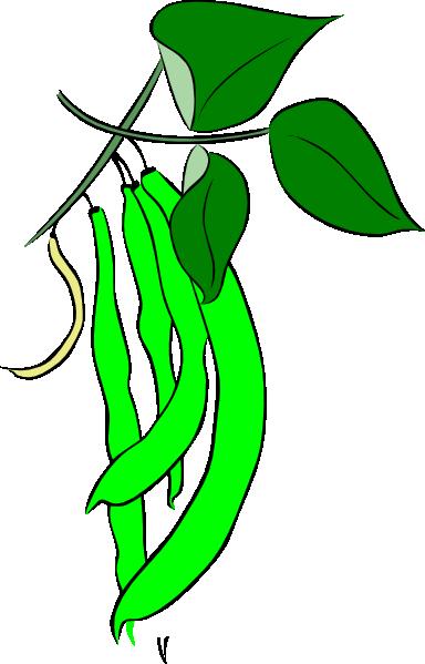384x599 Bean Plant Clipart Clipart Panda