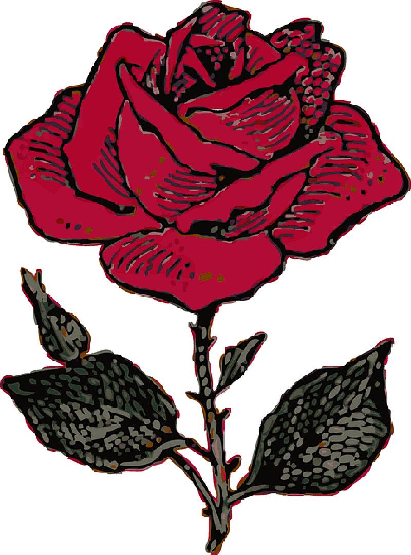 800x1080 Red, Outline, Flower, Cartoon, Love, Rose, Rosa, Free