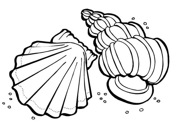 Cartoon Sea Shell