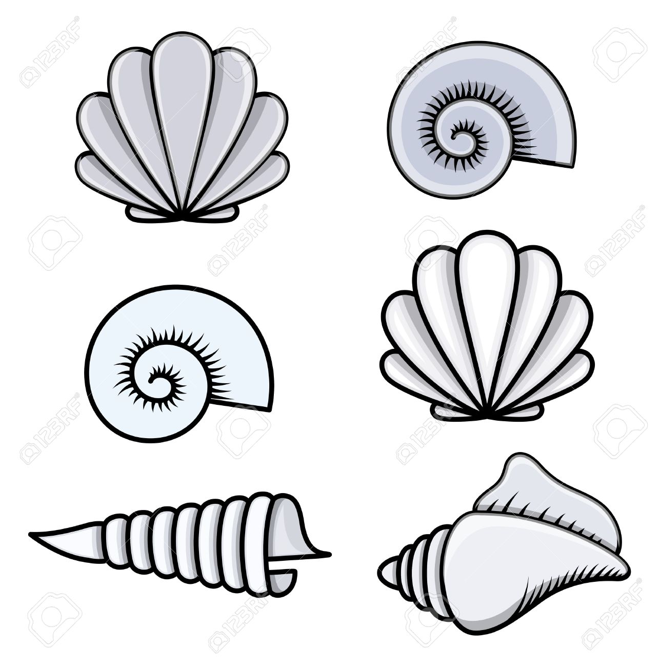 1285x1300 Conch Seashell Clipart, Explore Pictures