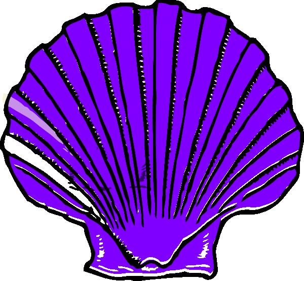 cartoon sea shell