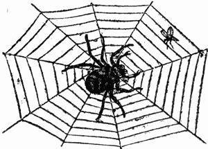 300x215 Spider Web Clip Art 2