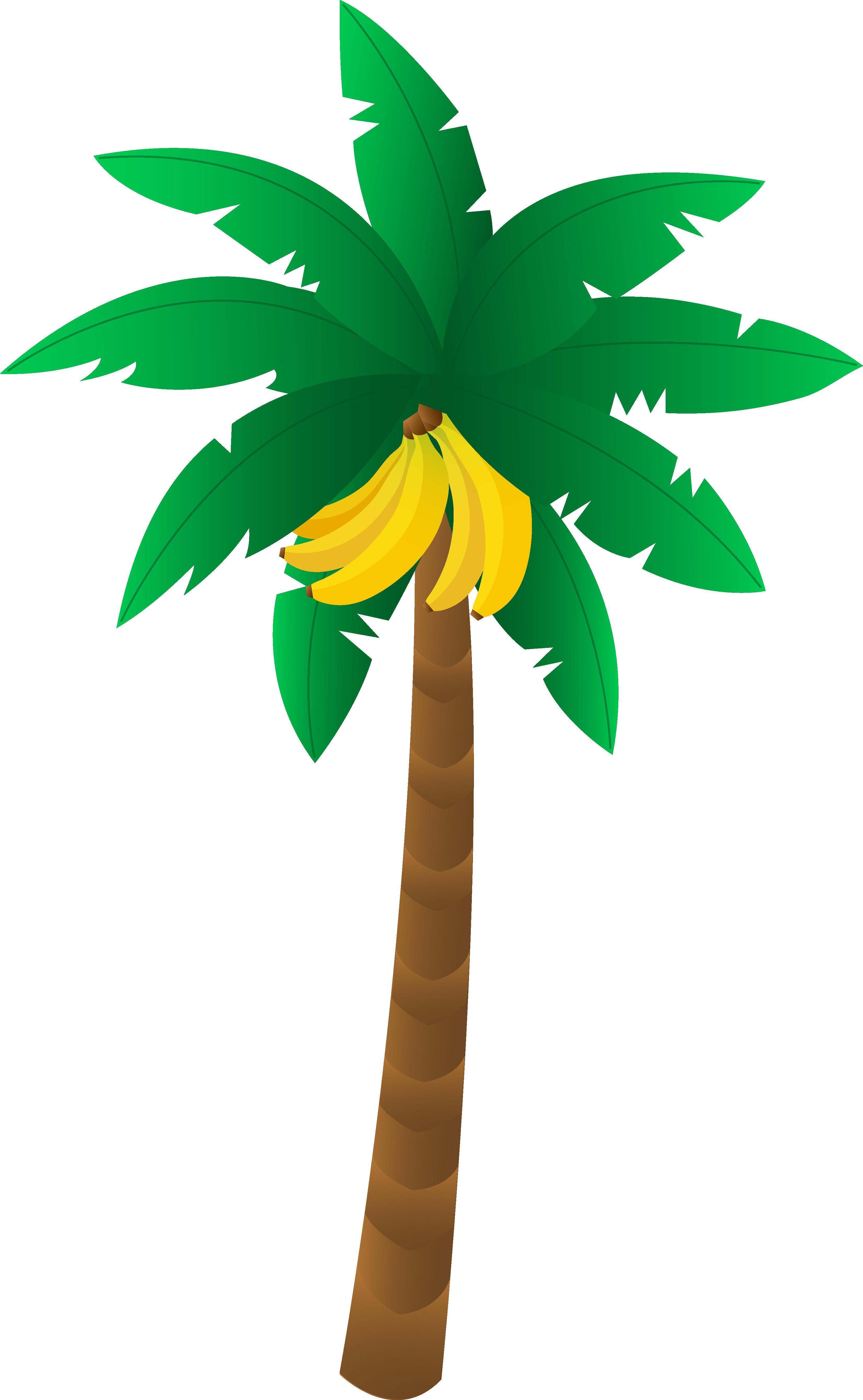 3305x5359 Tropical Banana Tree