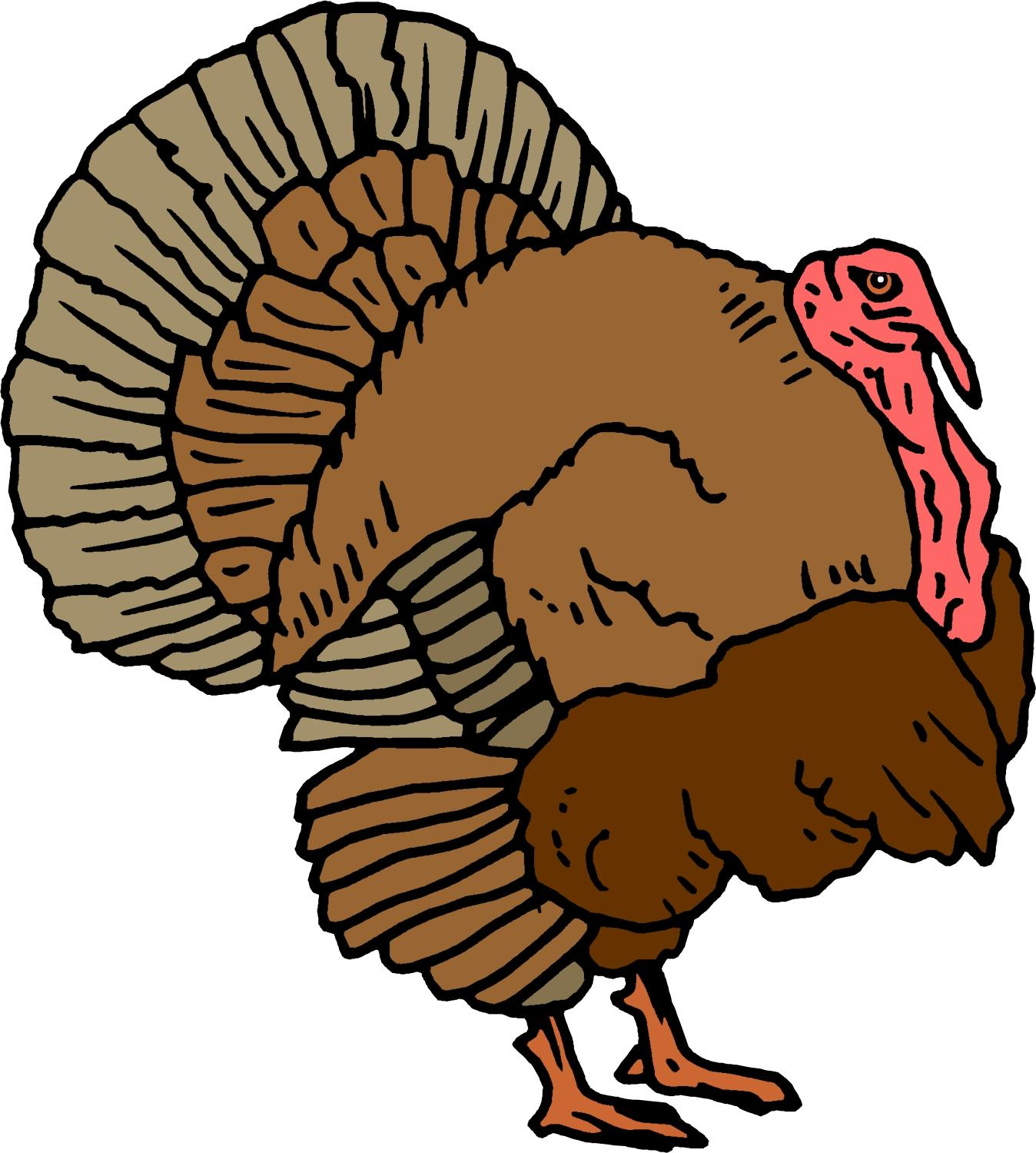 1348x1500 Unique Cartoon Turkey Animated Clip File Free