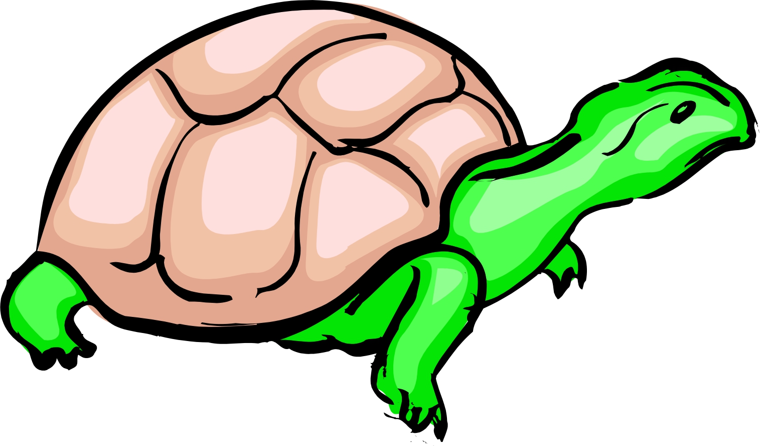1515x888 Turtle Cartoon Picture
