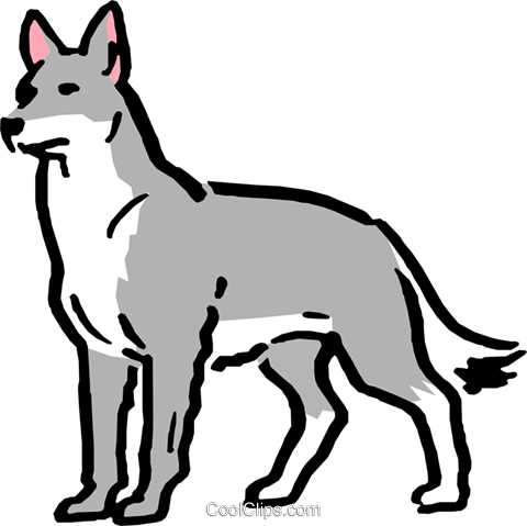 480x479 Cartoon Wolf Royalty Free Vector Clip Art Illustration Anim0582