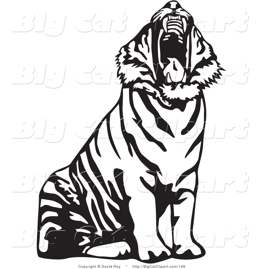 1024x1044 Tiger Clip Art Black And White Big Cat Vector Clipart Of A Yawning