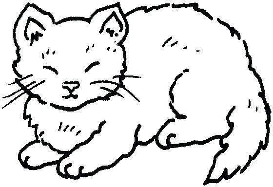 560x384 Cat Clipart Cat Coloring Pages Here Is A Small Collection Of Cute