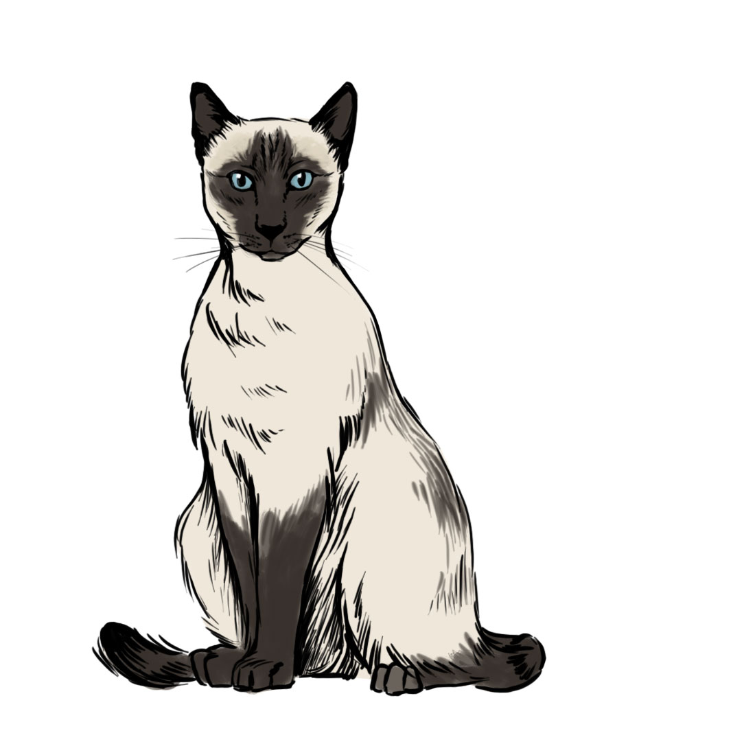 1100x1100 How To Draw A Siamese Cat 7 Steps (With Pictures)