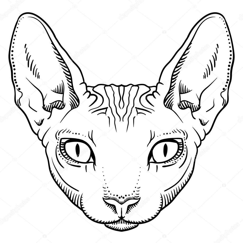 Cat Head Outline Free Download Best Cat Head Outline On