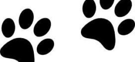 272x125 Paw Prints Clipart On Cat Paw Clip Art