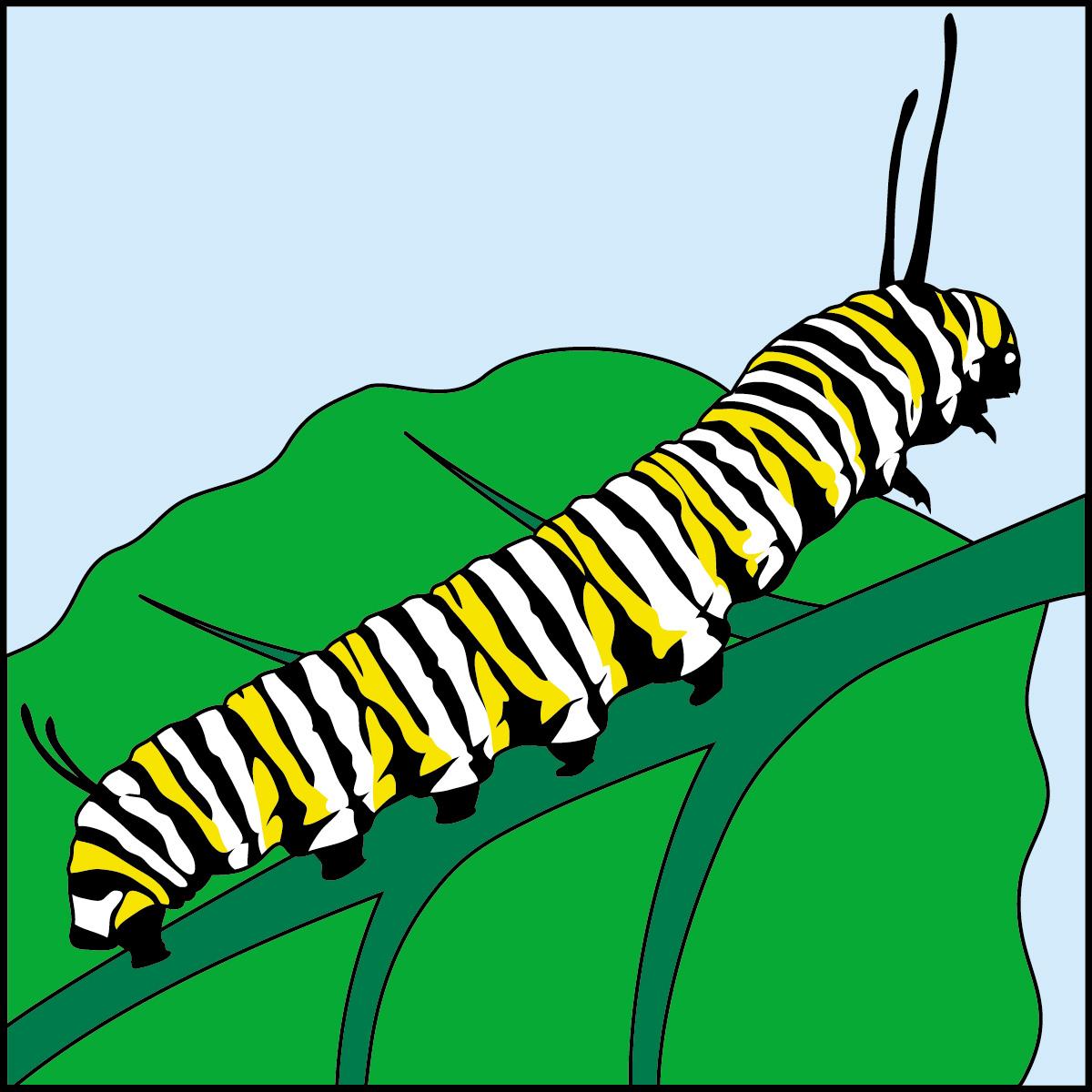 1200x1200 Caterpillar Clipart Monarch Caterpillar