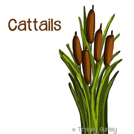 570x570 Pond Clipart Cattail