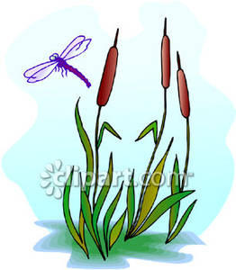 262x300 Purple Dragonfly Above Cattails Royalty Free Clipart Picture