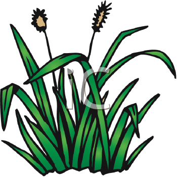 350x350 Royalty Free Cattail Clip Art, Plant Clipart