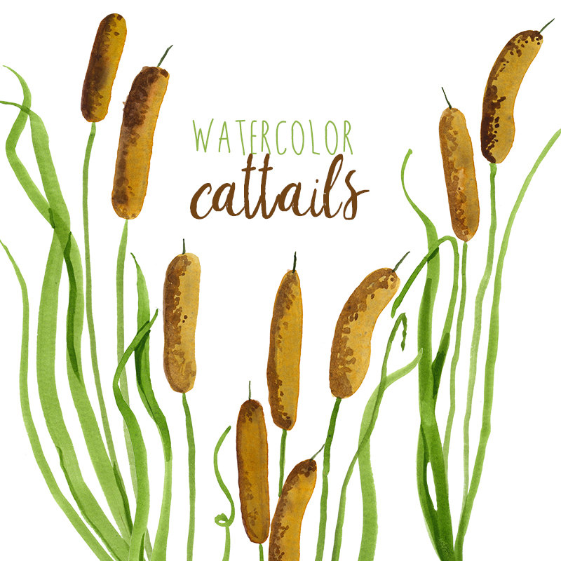 800x800 Scenery Clipart Cattail