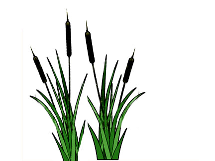 432x324 Similar To Cattail Clipart
