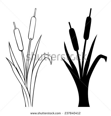 450x470 Wooden Cattails Silhouette Cattails Stock Photos, Royalty Free
