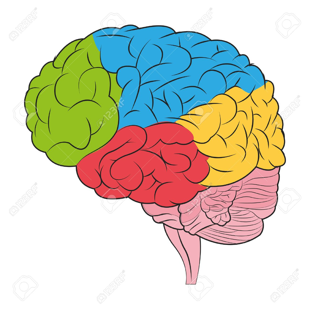1300x1300 Parts Of The Brain Clipart Amp Parts Of The Brain Clip Art Images