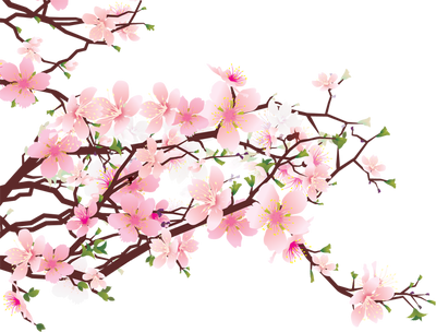 400x304 Beautiful Cherry Blossom Clipart