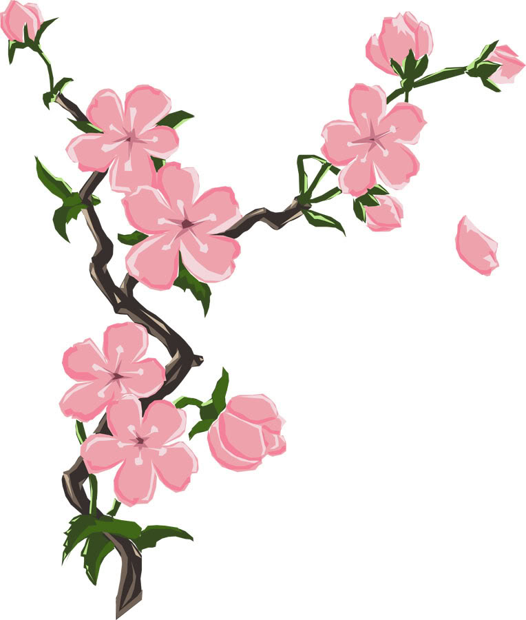 764x900 Cherry Blossom Drawings Clip Art