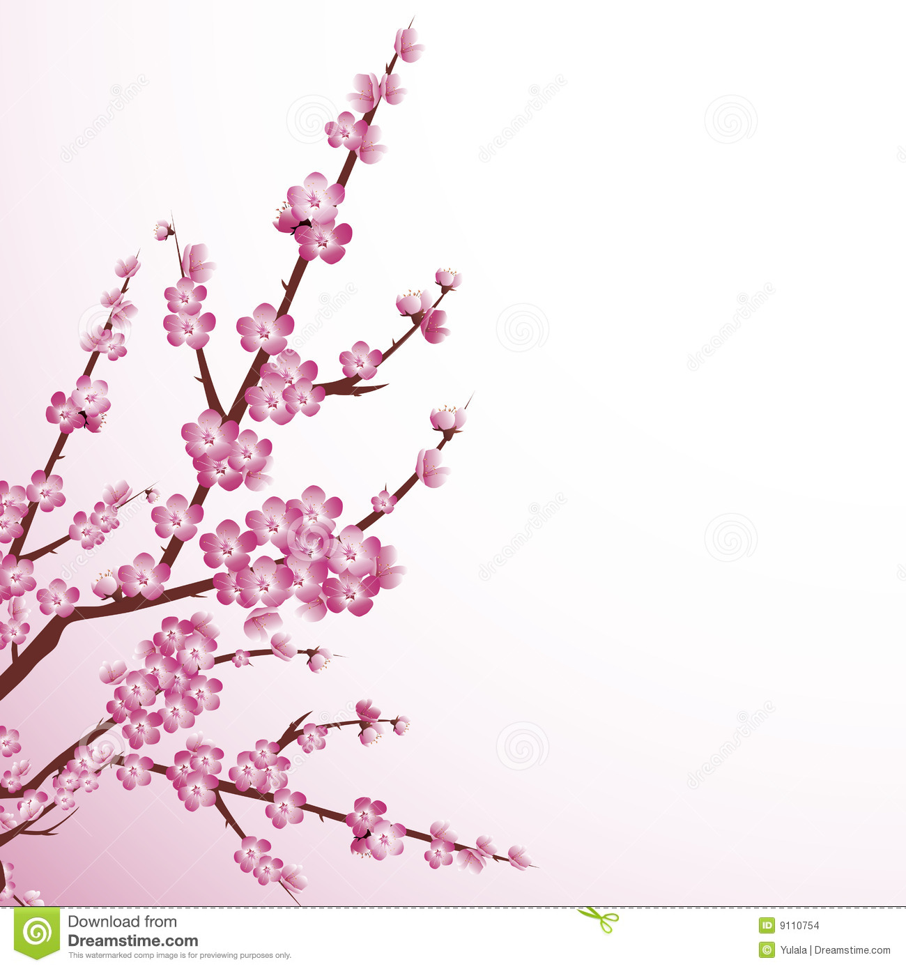 1300x1390 Cherry Blossom Stock Images