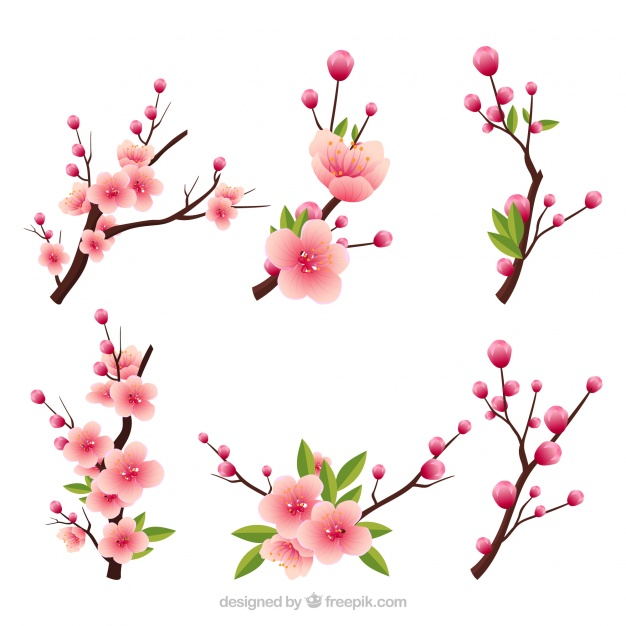 626x626 Cherry Blossom Vectors, Photos And Psd Files Free Download