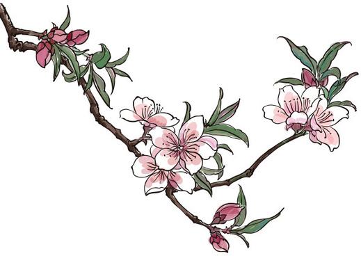 519x368 Cherry Blossom Clipart Peach Blossom