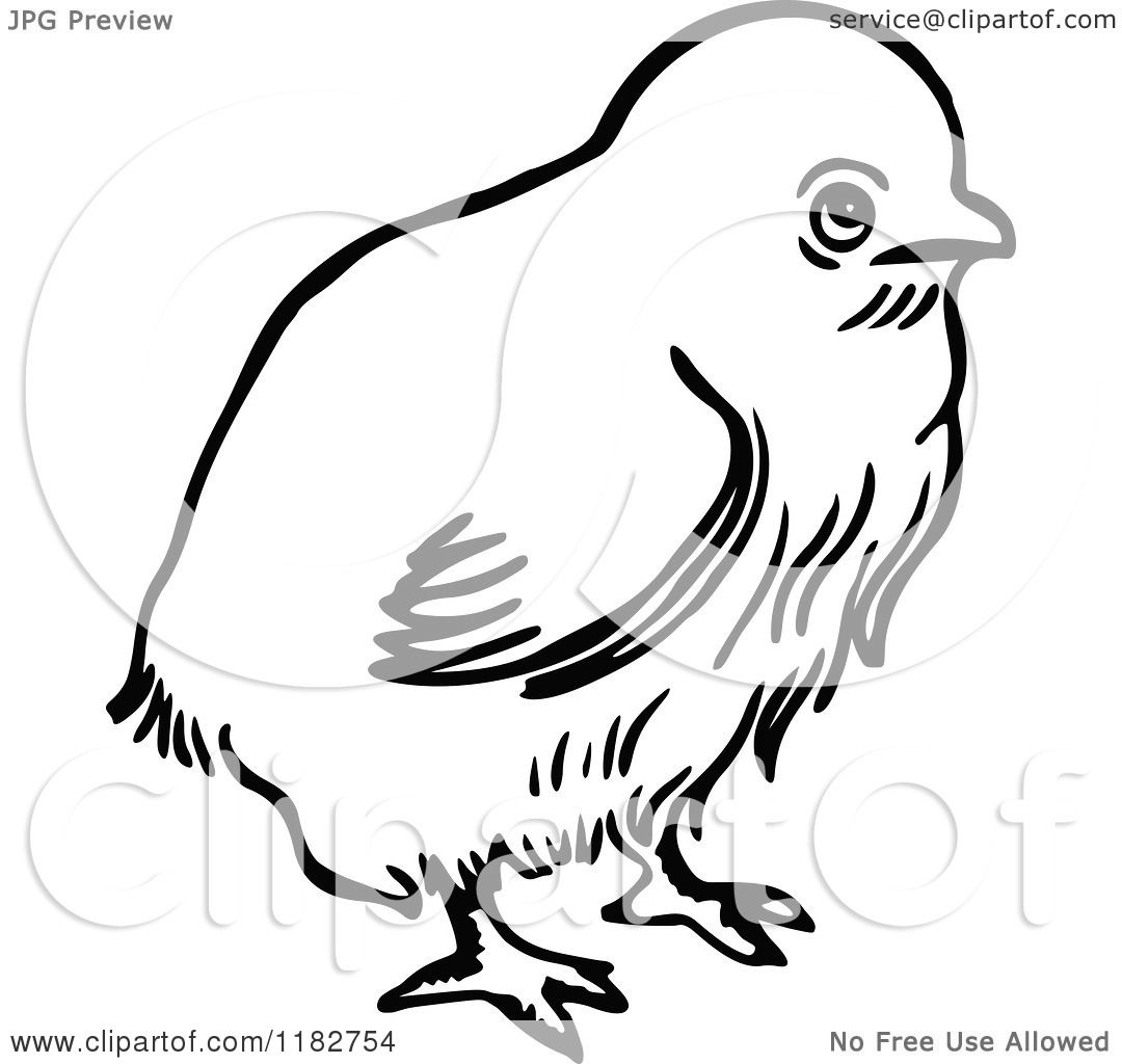 1080x1024 Clipart Of A Black And White Chick