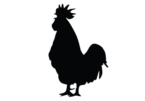 500x350 Chicken Silhouette Vector Download Silhouette Graphics