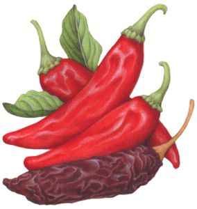 Chili Pepper Graphic