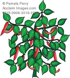 272x300 Art Illustration Of A Hot Chili Pepper Plant