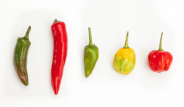 600x350 How Chili Peppers Work Stuff You Should Know