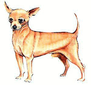 300x278 Chihuahua Clipart Free Clipart Images