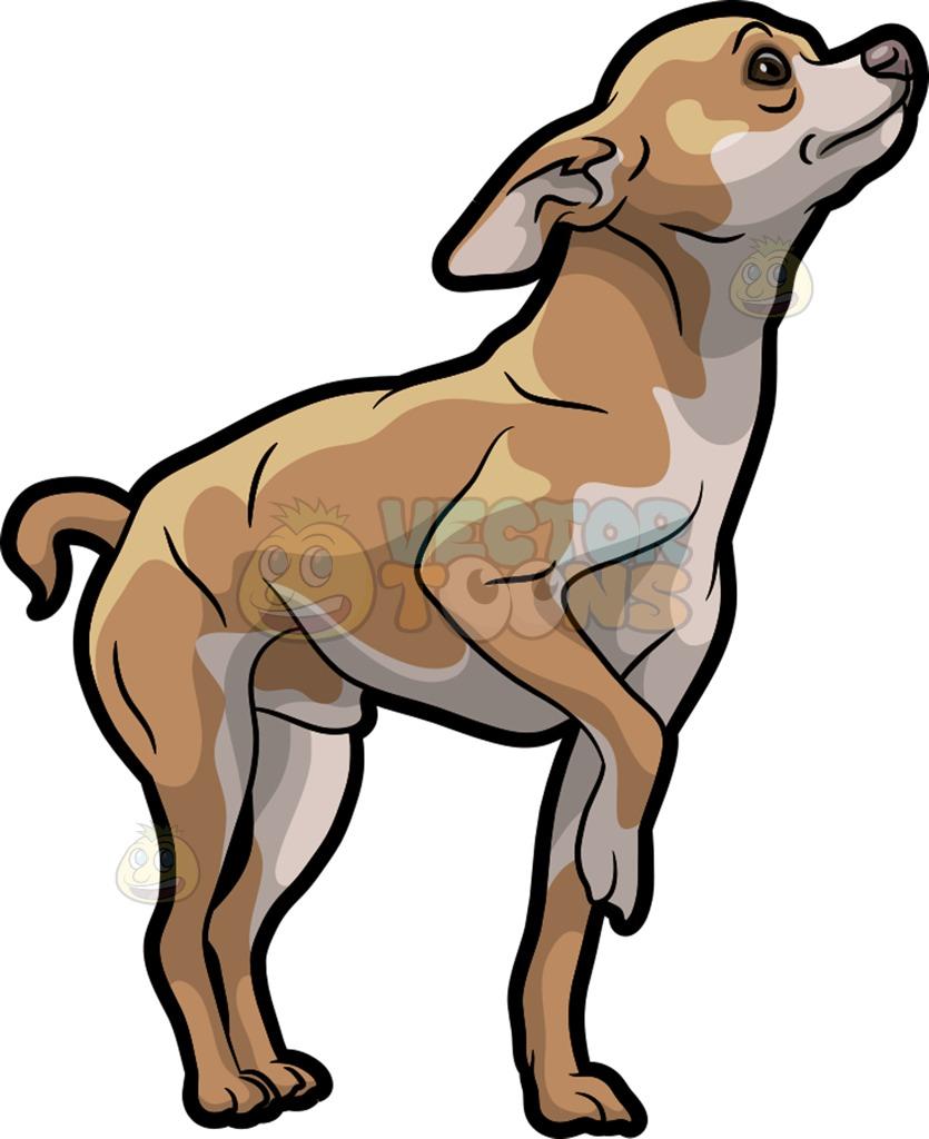 835x1024 Chihuahua Clipart Big Ear