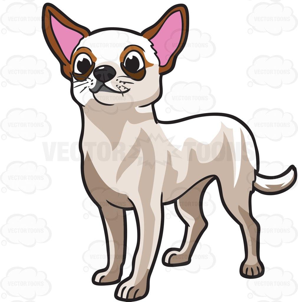 1011x1024 Chihuahua Clipart Cute