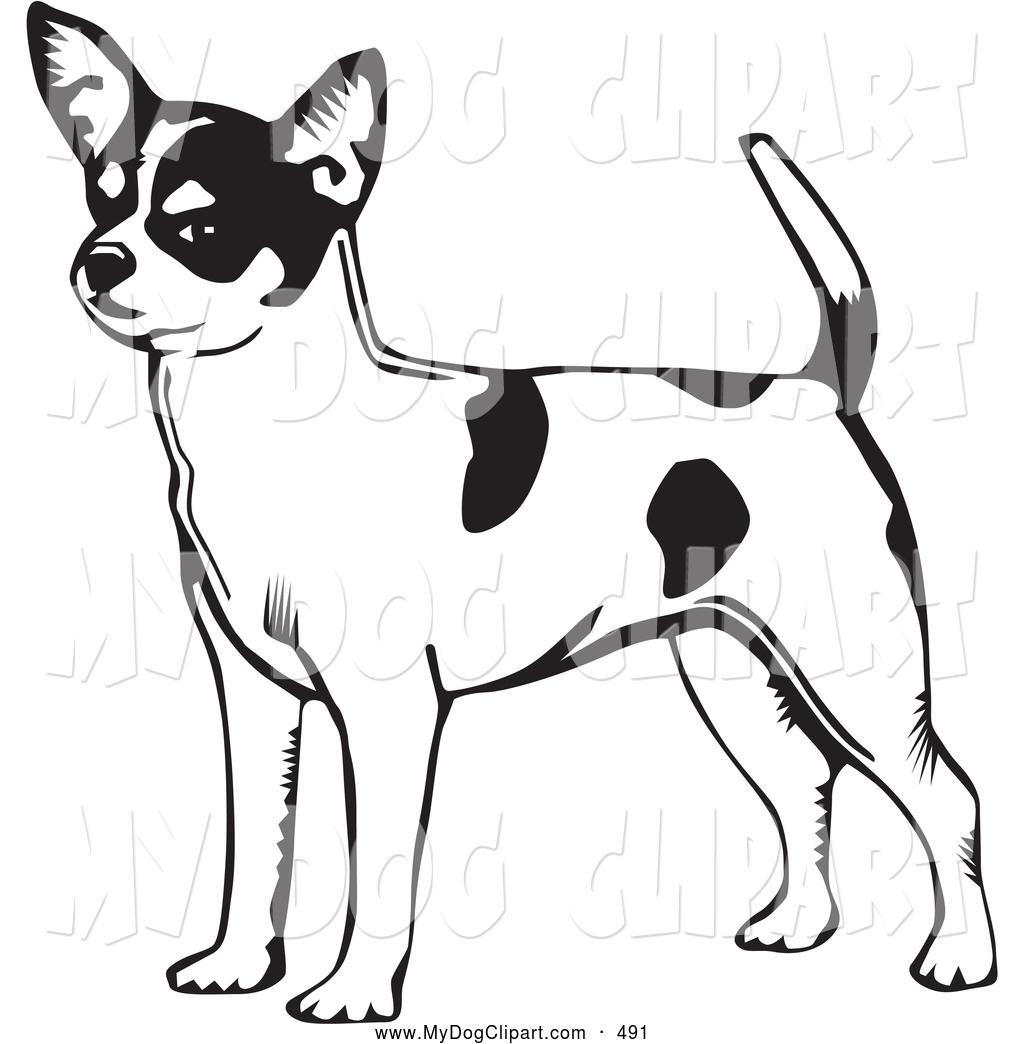 1024x1044 Cliprt Of Smilinglert Short Haired Chihuahua Dog