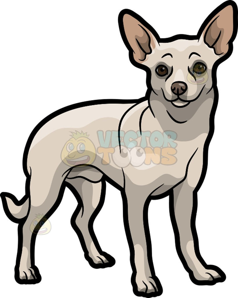 820x1024 A White Chihuahua Cartoon Clipart
