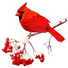 236x236 Virginia Cardinal Cliparts 272181