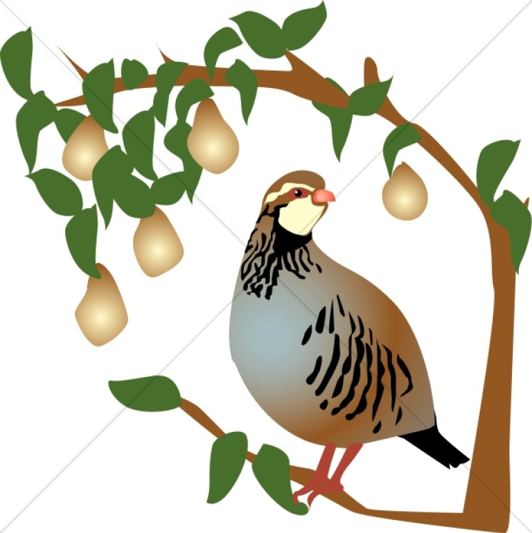 774x776 Partridge In A Pear Tree Clipart Religious Christmas Clipart