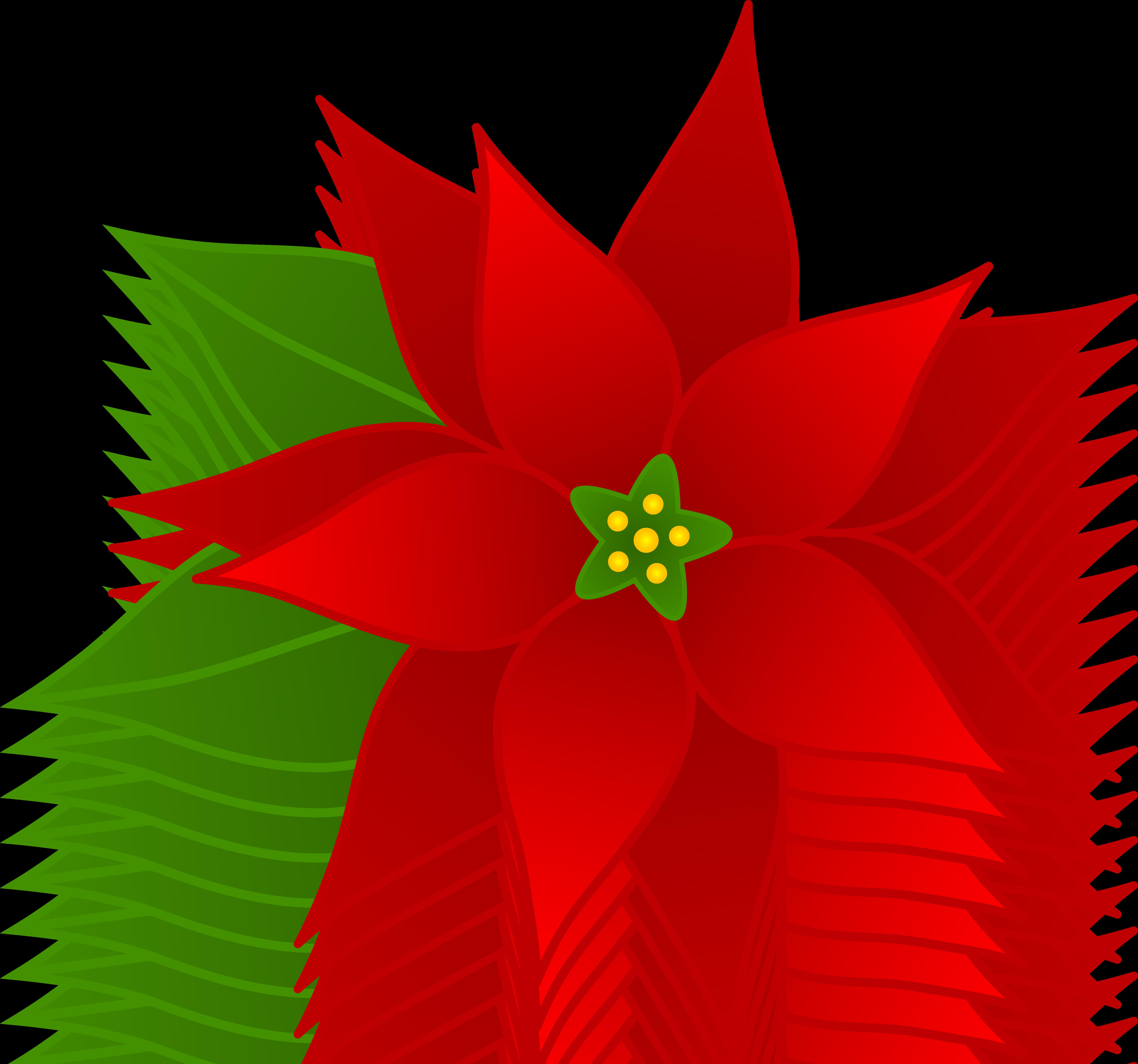 5747x5369 Christmas Poinsettia Flower